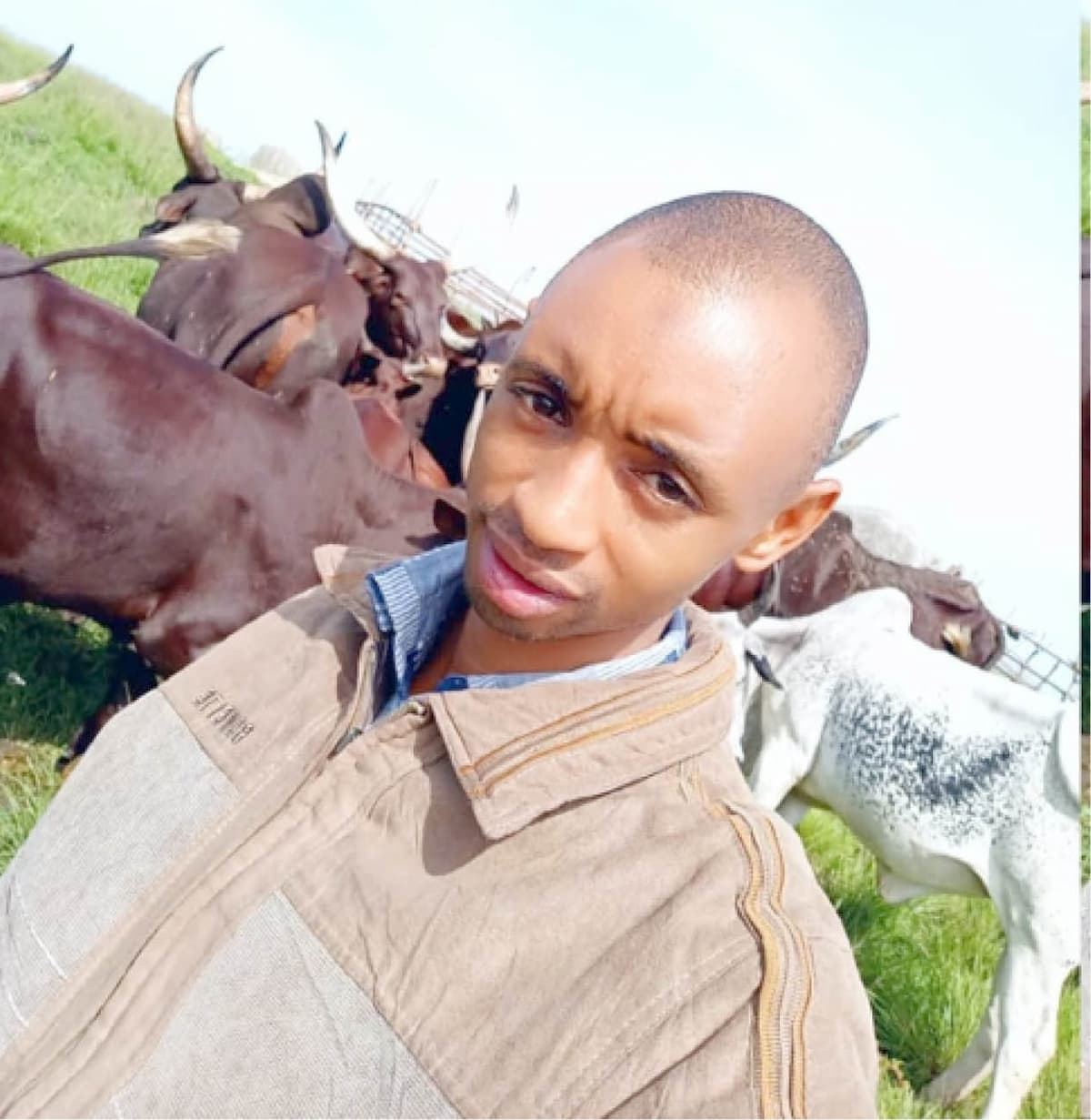 Adamu Dauda Garba with his cattle at his compound in Tep